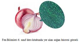 Fen Bilimleri 6. Sınıf Ders Kitabında Yer Alan Soğan Hücresi Görseli